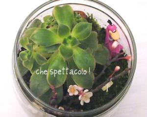terrarium preistoria 5b